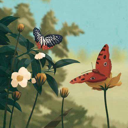 cartolina-farfalle